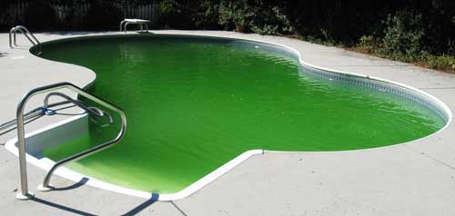 Green swimming pool
